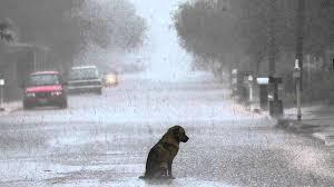 saddog.png